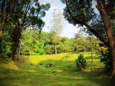 Botanic Perspective Of Penang Page 2 Botanical Garden Penang