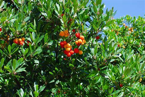mediterranean gardens plants for mediterranean gardens