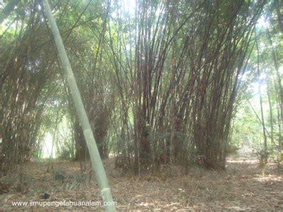 Wallpaper Bambu Hijau 10 Meter 45 Cm siipala official 187 archive 187 karakteristik bambu apus dan bambu el