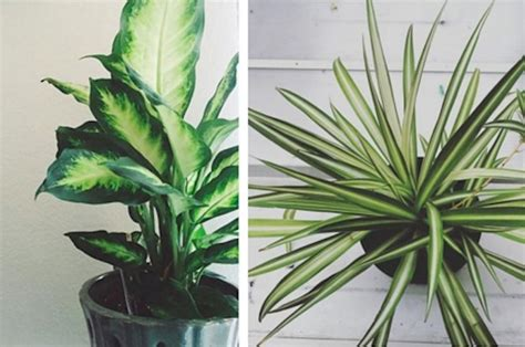 home plants 15 beautiful house plants that can actually purify your home
