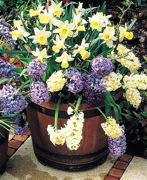 lasagna gardening in containers cedar grove s garden spot bulb lasagna a great way for