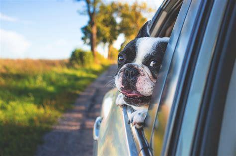 dog   car window hd animals  wallpapers