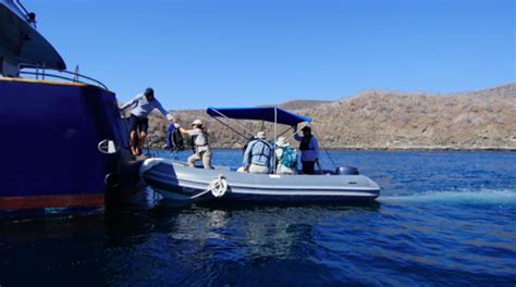 zodiac boat origin mv origin galapagos cruise offers a glass bottom zodiac