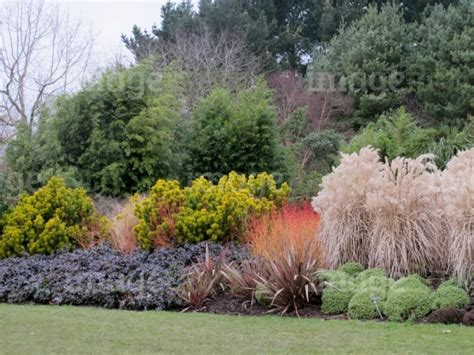 bamboo plants landscape designs design combinations shrubs conifers grasses bamboo planting in