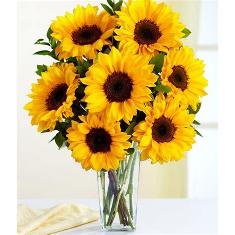 imagenes hermosas girasoles imagenes de flores bonitas fondos de pantalla