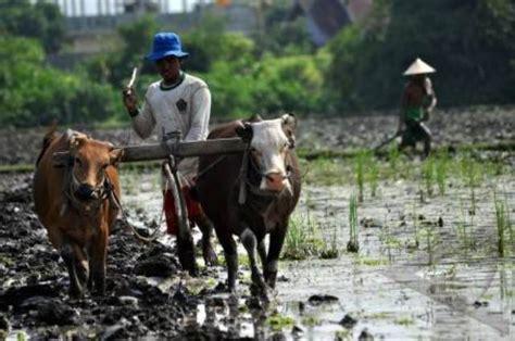 Garu Sisir mengenal beberapa alat pertanian tradisional jawa