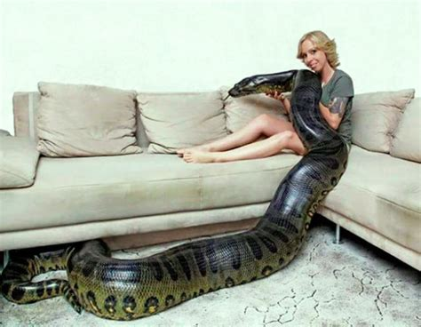 snake couch 35 funny pictures that ll crazy up your humorless day