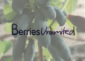 berries unlimited