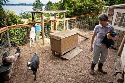 how to raise goats in your backyard raising goats in your backyard is it right for you