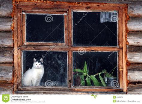 cat  window stock image image  house farmland barn