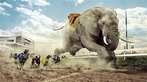 elephant wallpaper for walls elephant wallpapers best wallpapers