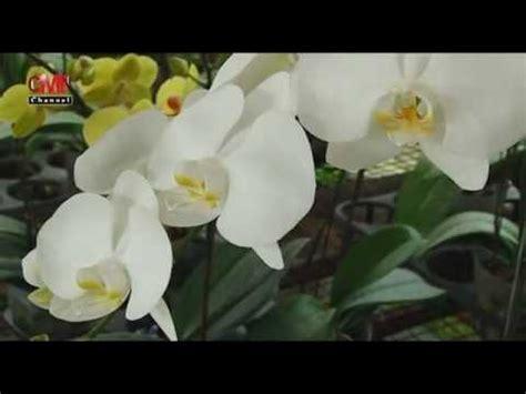 Pupuk Organik Untuk Bunga Aglaonema cara cara merawat anggrek yang benar doovi