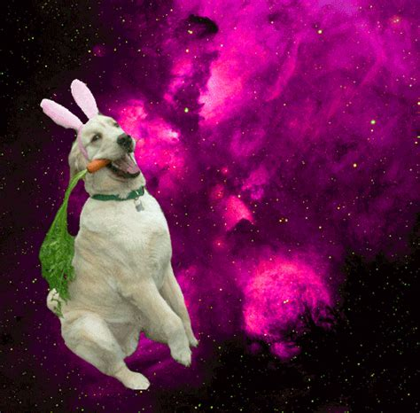 puppies in space dogs in space entropy