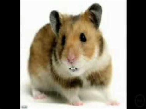 youtube music hamster dance hamster dance song singing hamsters youtube