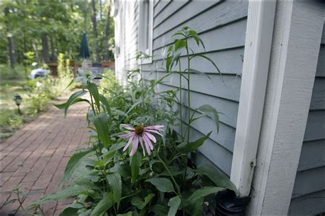 plants for side of house jon cross committing his property to native plants toledo blade