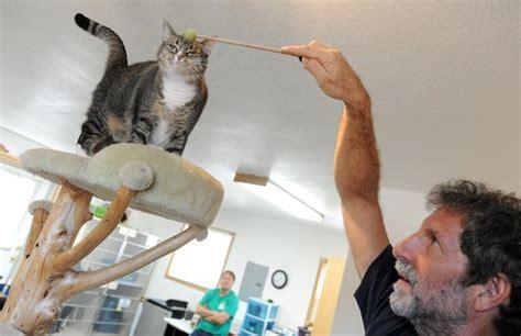 poudre puppy rescue fort collins loveland cat adoption center closes loveland reporter herald