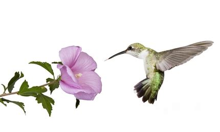 what is the only bird that can fly backwards what is the only bird that can fly backwards