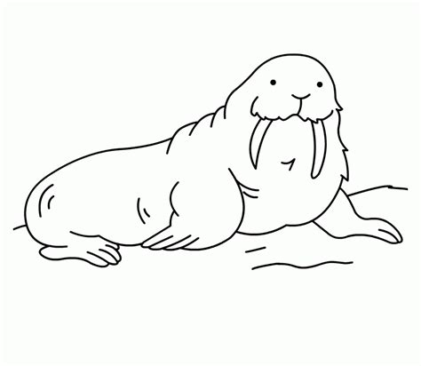 Free Cloring Pages Of Walrus Coloring Pages Pinterest Arctic Animals Colouring Pages