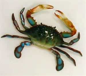 Blue Crab Decorations Large Replica Maryland Blue Crab House Wall Decor Ebay