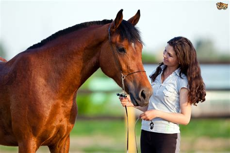 The Importance of Correcting Bad Behaviour in Horses and