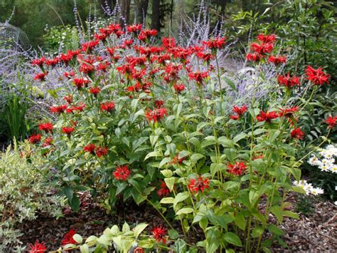 Landscape Vines Choosing Plants For Your Landscaping Hgtv