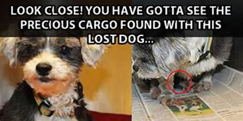 Lost Dog Meme - when this lost dog was found rescuers had an unexpected