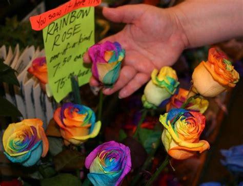 Bibit Bunga Rainbow mawar pelangi rainbow dan faktanya bibitbunga