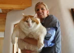 world 39 s house cat