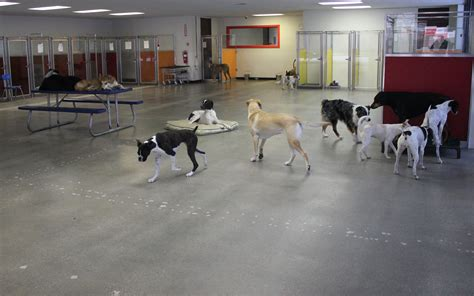 puppy day care utah park your dogs will cageless doggie day care experience