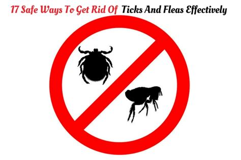 17 safe ways to get rid of ticks and fleas effectively