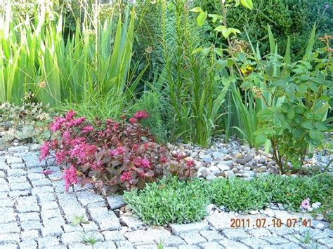 Pflanzen Für Kiesgärten by Projekt Kiesgarten