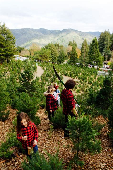 christmas tree farm in los gatos california
