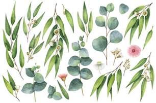 watercolor eucalyptus by design boutique thehungryjpeg com