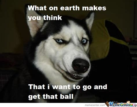 retarded dogs you memes best collection of you pictures