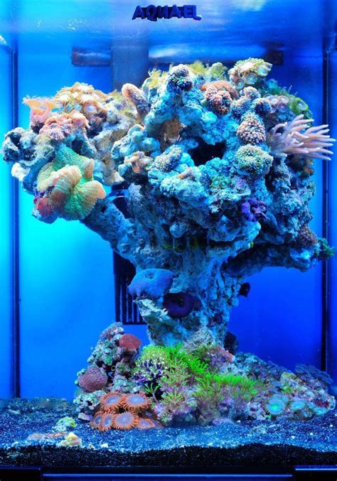 Aquascaping Live Rock Ideas Aquarium Cover Designs Woodworking Projects Amp Plans