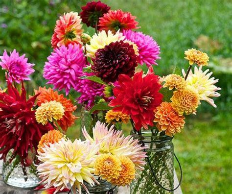 immagini dei fiori fiori immagini e foto da condividere sapevatelo