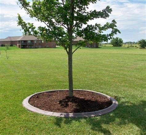 Landscape Edging Around Trees Best 25 Landscape Around Trees Ideas On