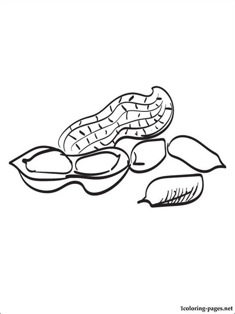 peanut coloring page coloring pages