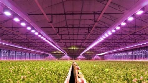 Greenhouse Lighting Fixtures Led Grow Lights The Right Led Greenhouse Lighting Gs Horti
