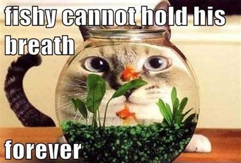 fishy breath cat quotes cat sayings cat picture quotes page 2