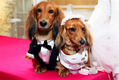puppy wedding cutest and most expensive wedding held in new york
