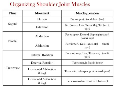 bench press muscles and joints used ess 3092 week 4 student shoulder