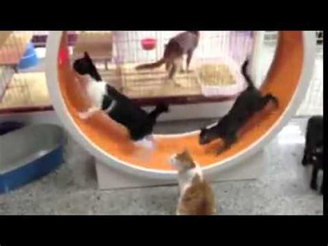 Rok Tutu Lucu Untuk Anjing Dan Kucing cara membuat rumah kucing sederhana funnycat tv
