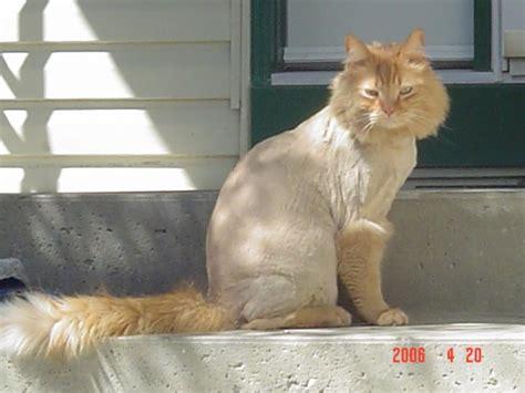 Shaved Cat Meme - pin shaved cat is sad meme center on pinterest