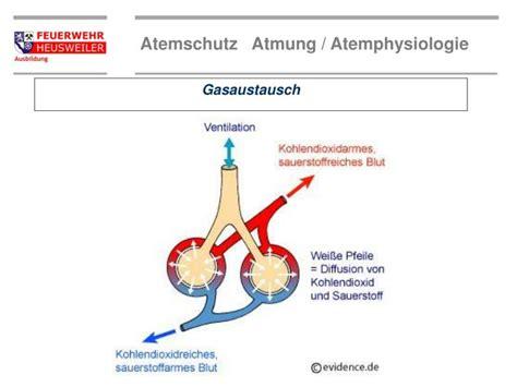 Beschriftung Lunge by Ppt Wie Lange Brennt Das Lebenslicht Powerpoint