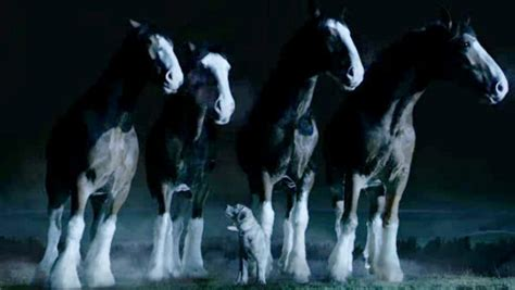 golden retriever budweiser commercial budweiser s bowl commercial 2015 clydesdale horses save puppy