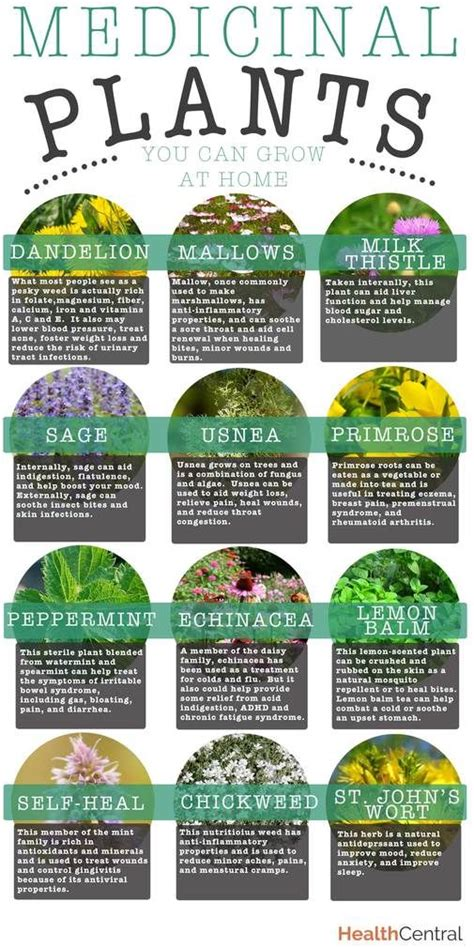 12 best medicinal plants to grow at home home and garden