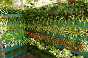 Fotos de jardim vertical simples e barato