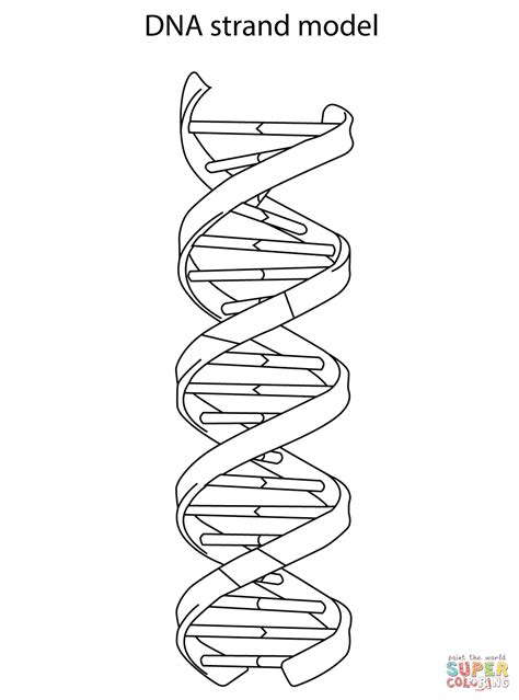 dna strand model coloring page free printable coloring pages