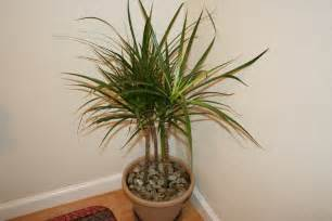 Tropical Foliage House Plants - top 10 tropical house plants any one can grow the self sufficient living